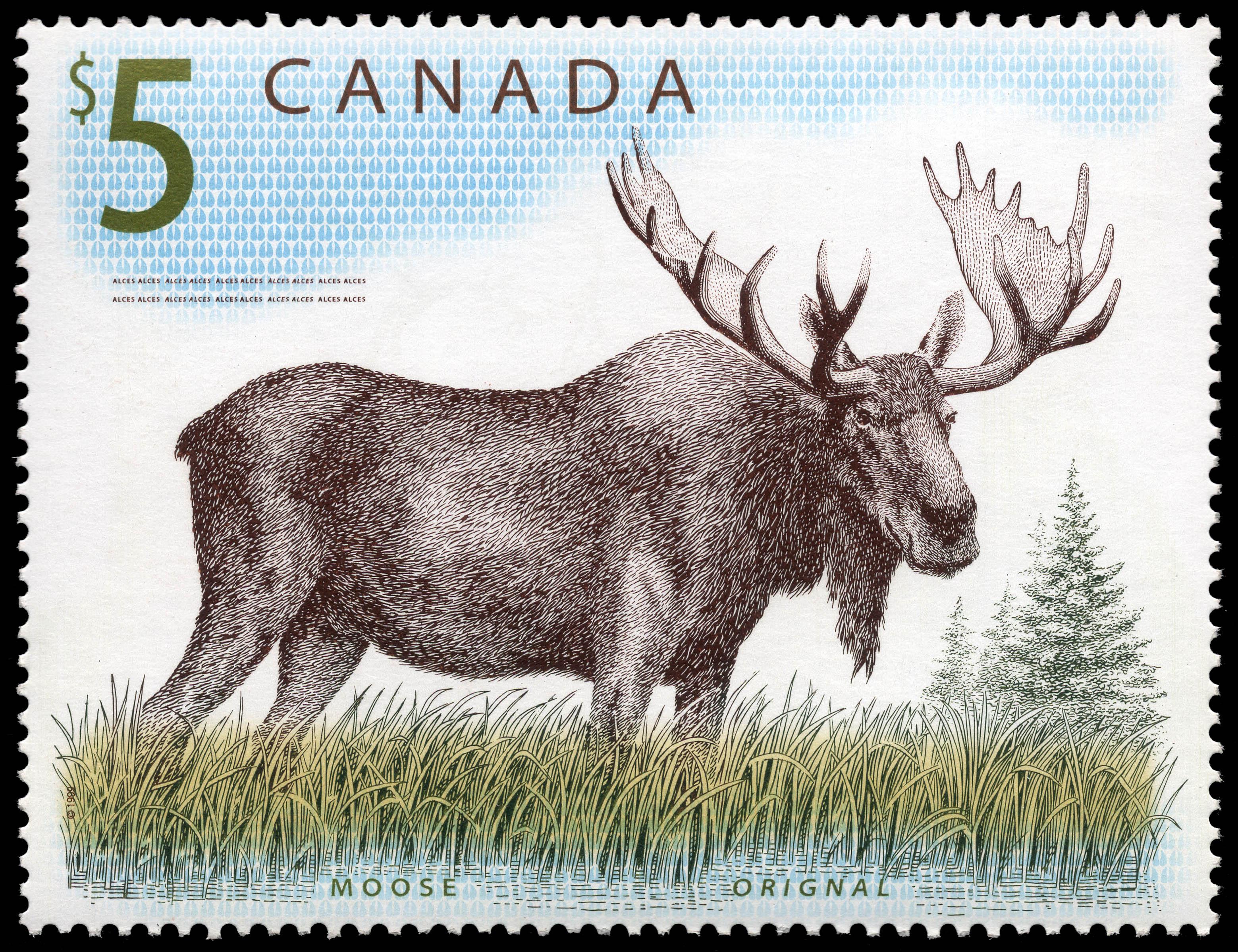 Moose Canada Postage Stamp | Canadian Wildlife