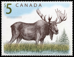 Moose Canada Postage Stamp | Canadian Wildlife