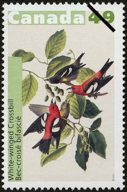 White-winged Crossbill Canada Postage Stamp | John James Audubon's Birds