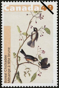 Boreal Chickadee Canada Postage Stamp | John James Audubon's Birds