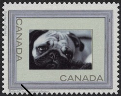 Pug - Silver Frame Canada Postage Stamp | Write Me ... Ring Me