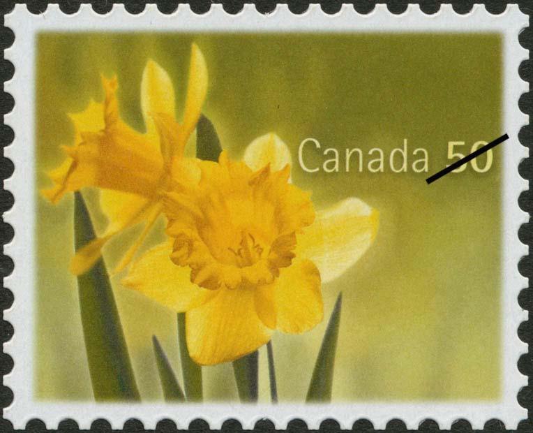 Yellow daffodils Canada Postage Stamp   Daffodils