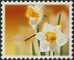 White daffodils Canada Postage Stamp | Daffodils