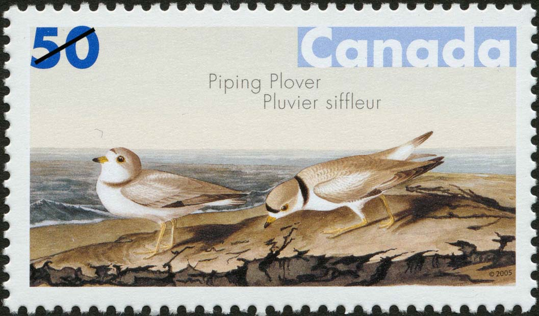 Piping Plover Canada Postage Stamp | John James Audubon's Birds