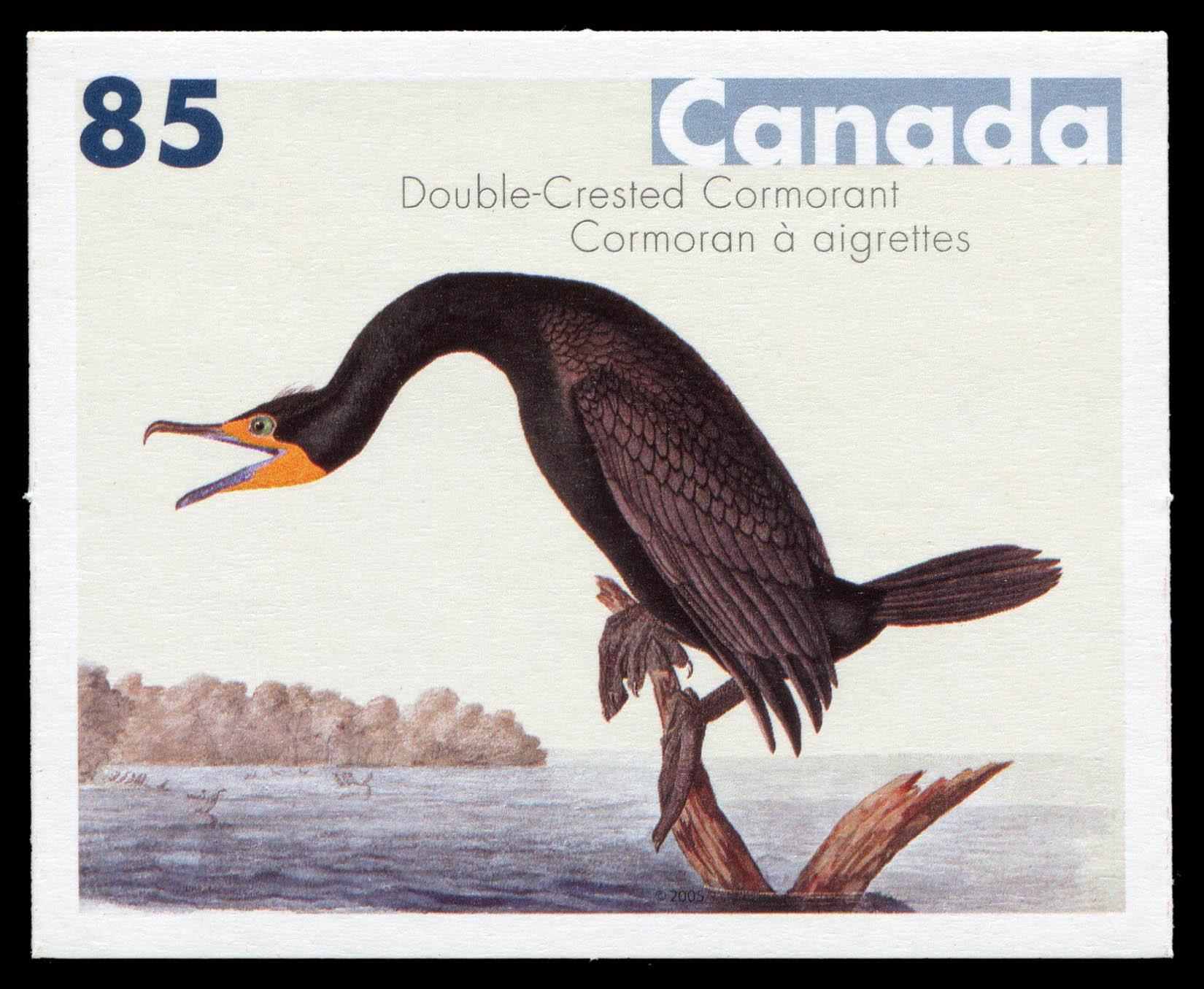Double-Crested Cormorant Canada Postage Stamp | John James Audubon's Birds
