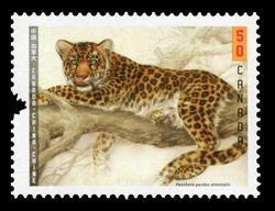 Amur leopard - Panthera pardus orientalis Canada Postage Stamp | Canada-China Joint Issue : Big Cats