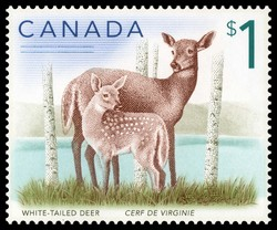 White-tailed deer Canada Postage Stamp | Canadian Animals