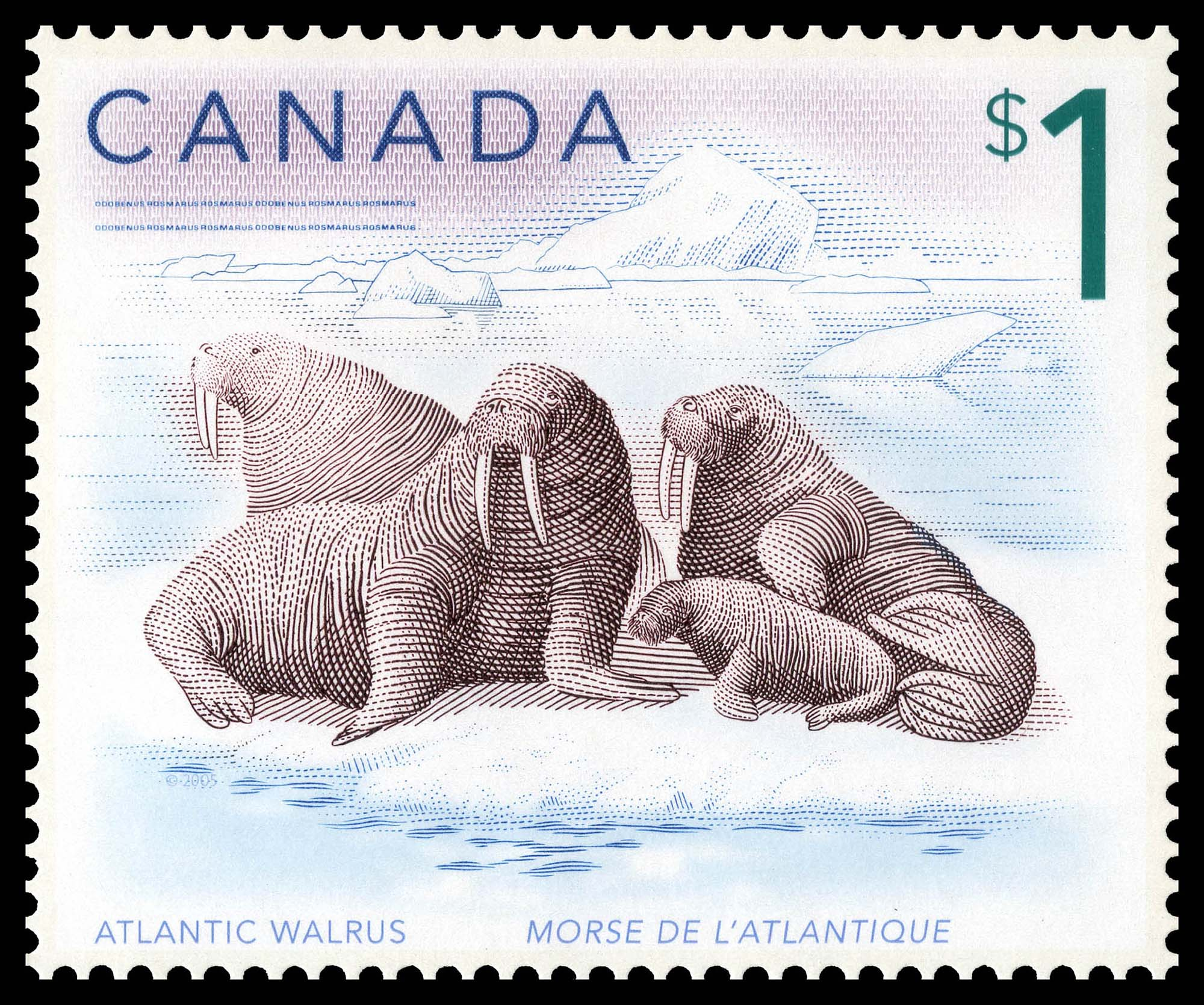 Atlantic walrus Canada Postage Stamp | Canadian Animals