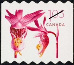 Pink fairy slipper - Calypso bulbosa Canada Postage Stamp | Flowers