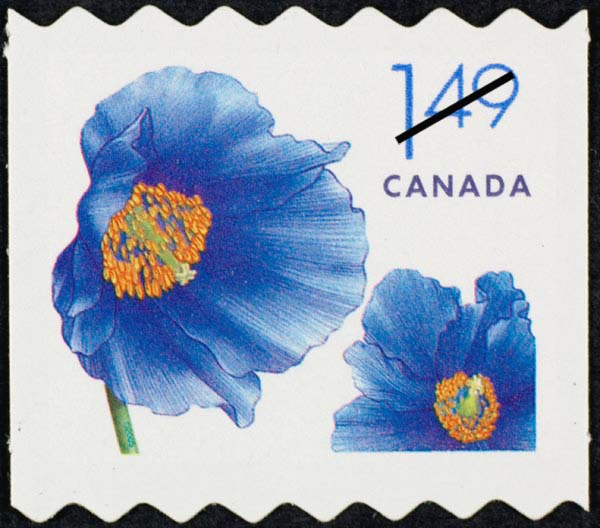 Himalayan blue poppy - Meconopsis betonicifolia Canada Postage Stamp | Flowers