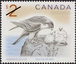 Peregrine falcon Canada Postage Stamp | Canadian Animals
