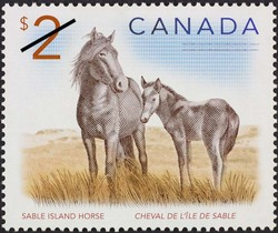 Sable Island horse Canada Postage Stamp | Canadian Animals