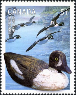 Barrow's golden eye Canada Postage Stamp   Duck decoys