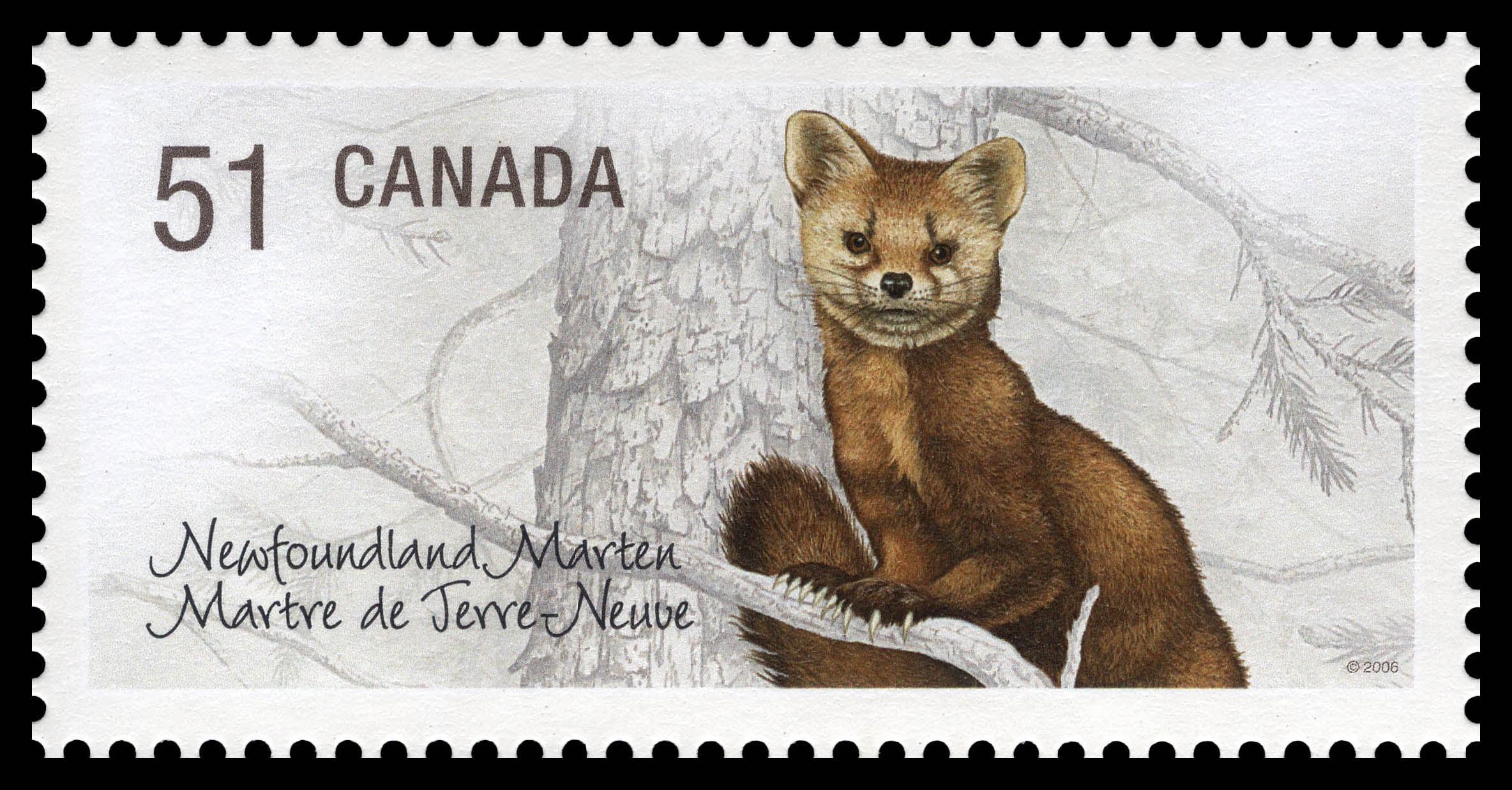Newfoundland marten Canada Postage Stamp | Endangered Species