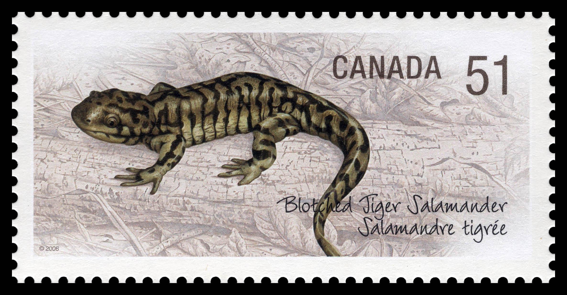Blotched tiger salamander Canada Postage Stamp | Endangered Species