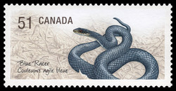 Blue racer Canada Postage Stamp | Endangered Species