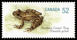 Northern Cricket Frog Canada Postage Stamp | Endangered Species