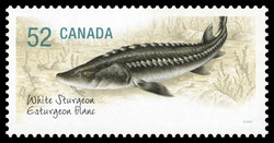 White Sturgeon Canada Postage Stamp