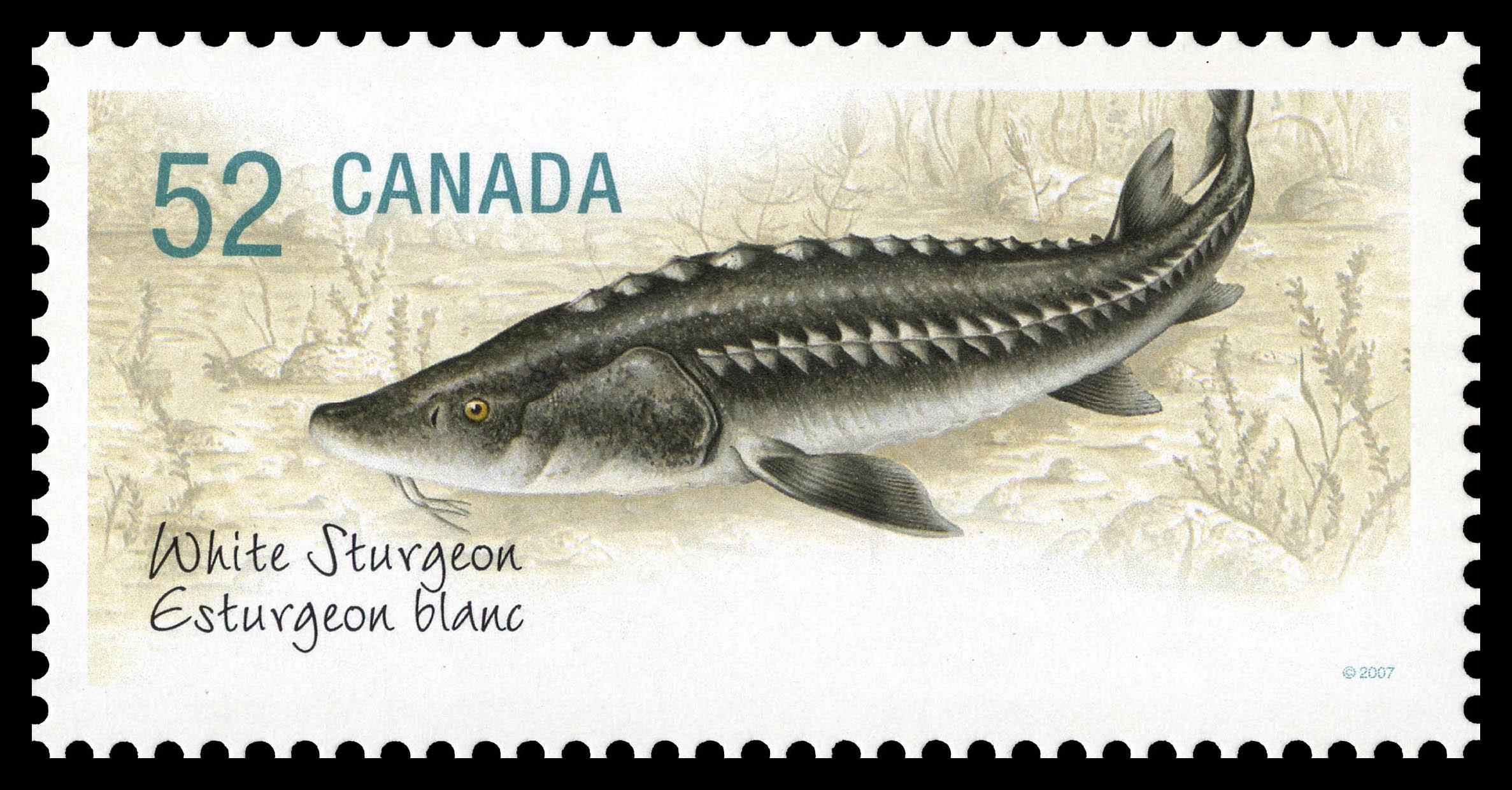 White Sturgeon Canada Postage Stamp | Endangered Species