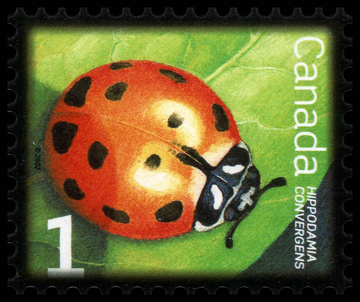 Convergent Lady Beetle Canada Postage Stamp