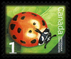 Convergent Lady Beetle Canada Postage Stamp | Beneficial Insects