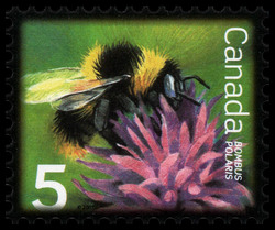 Northern Bumblebee Canada Postage Stamp | Beneficial Insects