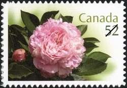 Elgin Canada Postage Stamp | Peonies