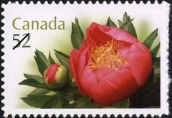 Coral 'n Gold Canada Postage Stamp | Peonies