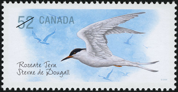 Roseate Tern Canada Postage Stamp | Endangered Species