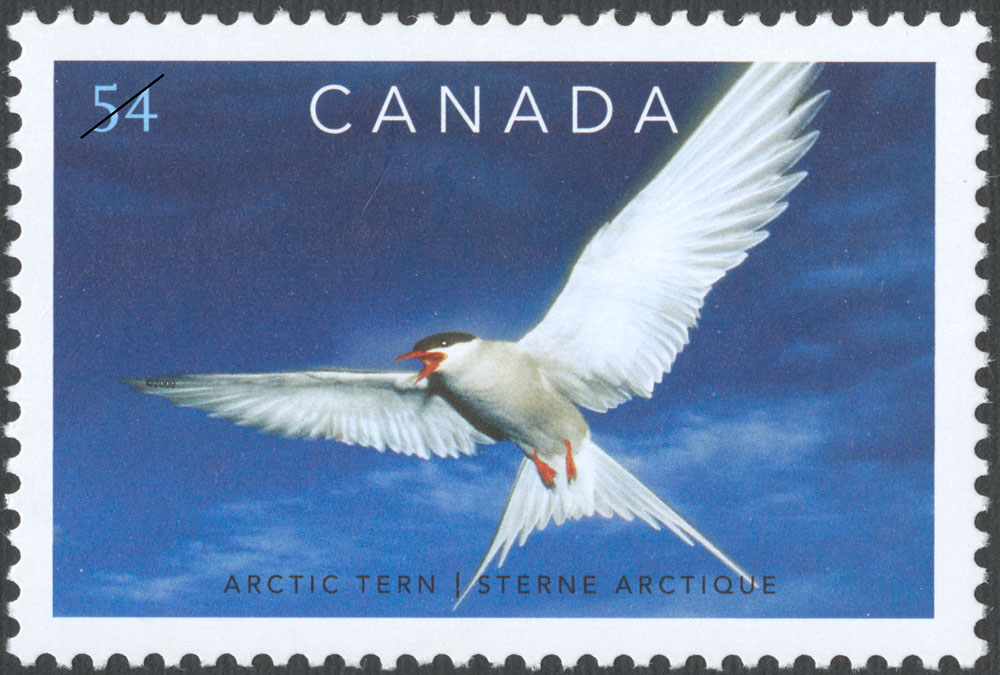 Arctic Tern Canada Postage Stamp | Preserve the Polar Regions and Glaciers
