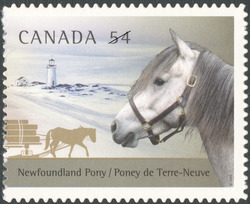 Newfoundland Pony Canada Postage Stamp | The Canadian Horse and the Newfoundland Pony