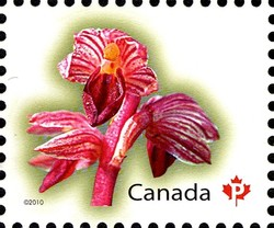 Striped Coralroot Canada Postage Stamp | Flowers