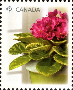 Decelles' Avalanche Canada Postage Stamp | African Violets
