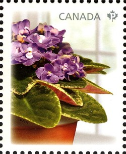 Picasso Canada Postage Stamp | African Violets