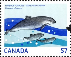 Harbour Porpoise Canada Postage Stamp | Marine Life