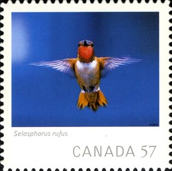 Selasphorus rufus (Rufous Hummingbird) Canada Postage Stamp | Canadian Geographic's Wildlife Photography of the Year