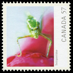 Tettigoniidae (Katydid) Canada Postage Stamp | Canadian Geographic's Wildlife Photography of the Year