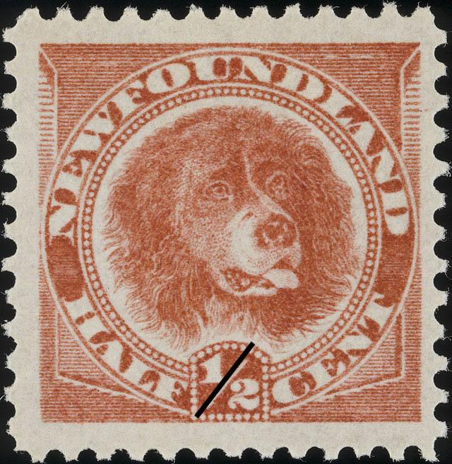 Newfoundland Dog Newfoundland Postage Stamp