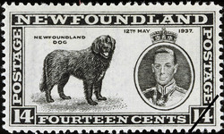Newfoundland Dog, King George VI, 12th May 1937 Newfoundland Postage Stamp
