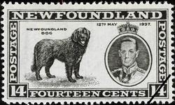 Newfoundland Dog, King George VI, 12th May 1937 Newfoundland Postage Stamp