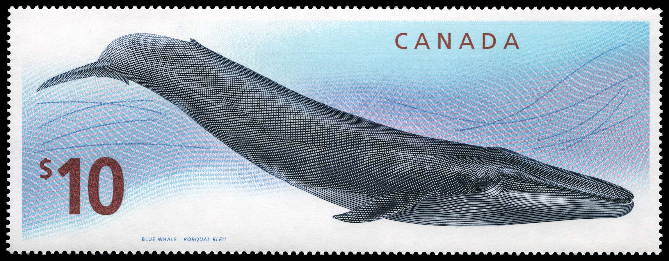 Blue Whale Canada Postage Stamp