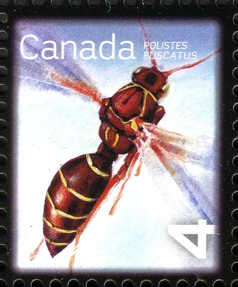 Northern Paper Wasp (Polistes fuscatus) Canada Postage Stamp | Beneficial Insects