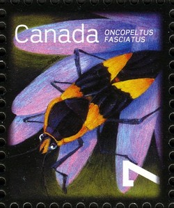 Large Milkweed Bug (Oncopeltus fasciatus) Canada Postage Stamp | Beneficial Insects
