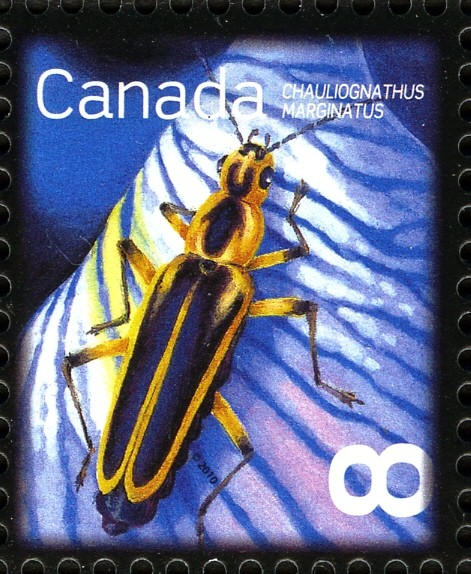 Margined Leatherwing (Chauliognathus marginatus) Canada Postage Stamp | Beneficial Insects
