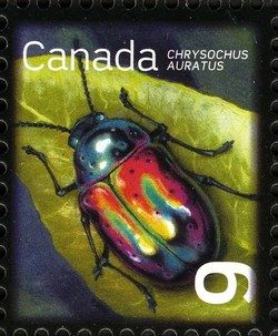 Dogbane Beetle (Chrysochus auratus) Canada Postage Stamp | Beneficial Insects