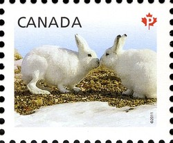 Artic Hare - Baby Wildlife Canada Postage Stamp | Baby Wildlife - Definitives
