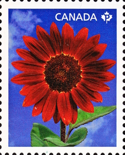 Prado Red - Sunflower Canada Postage Stamp | Sunflowers
