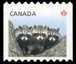 Raccoons - Baby Wildlife  Canada Postage Stamp | Baby Wildlife - Definitives