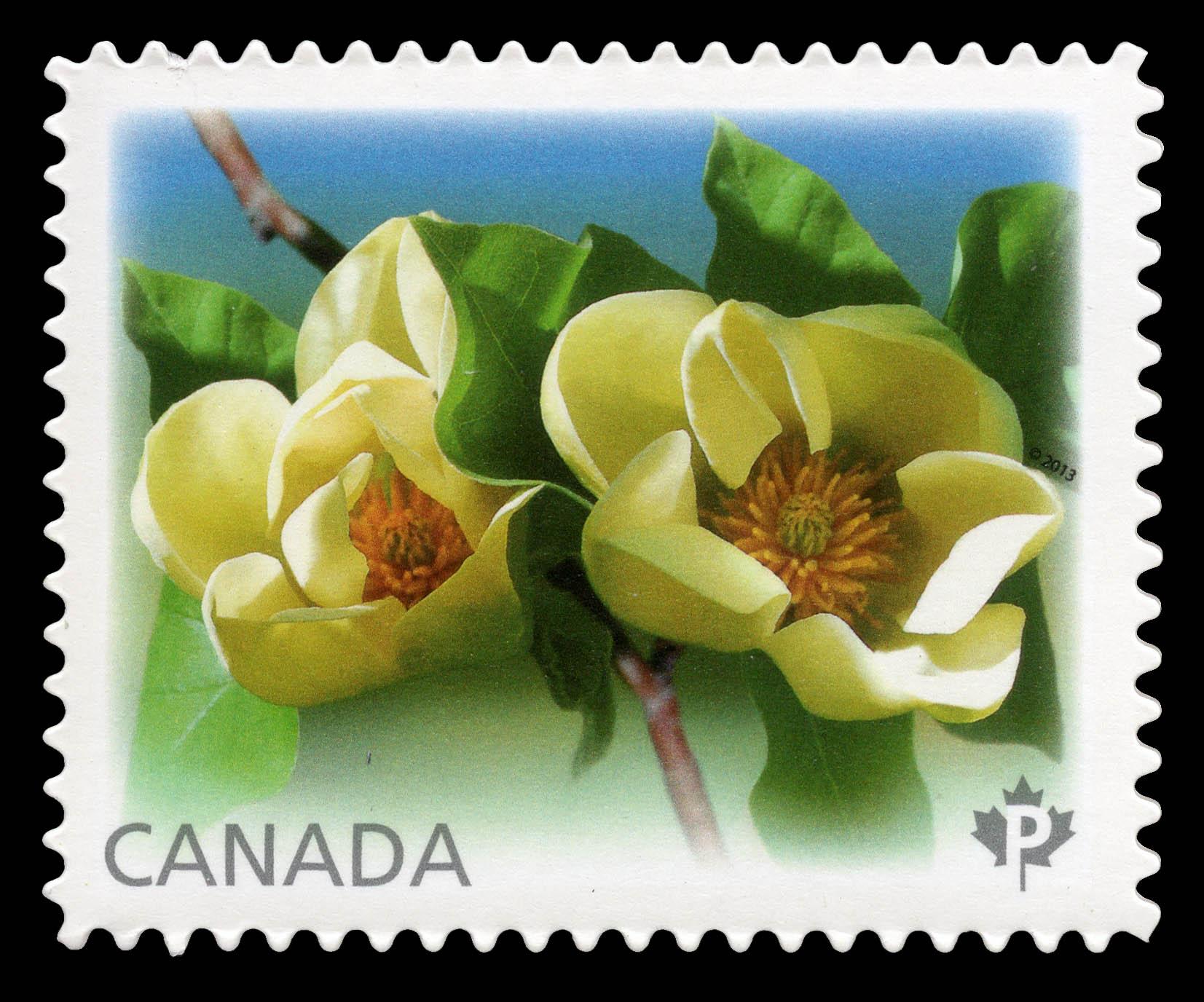 Yellow Bird Magnolias Canada Postage Stamp   Magnolias