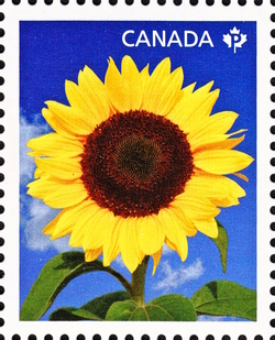 Sunbright - Sunflower Canada Postage Stamp | Sunflowers